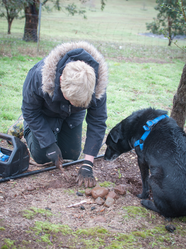 Digging for truffles